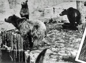 Photo of bears in the Buchenwald zoo
