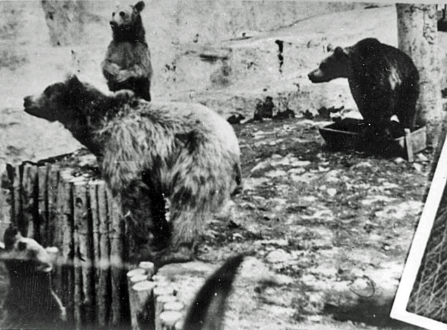 Photo of bears, enhanced in PhotoShop