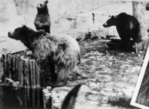 Bears in the Treblinka zoo