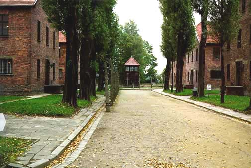 Compulsivey arranged path through Auschwitz camp
