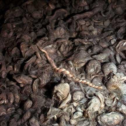 Holocaust shaved hair