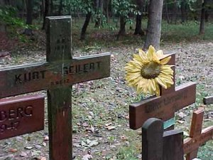 German grave is decorated with a Sunflower