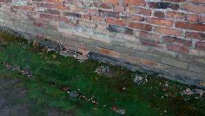 Brick barracks at Auschwitz were built with no foundations