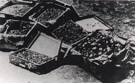 Gold teeth allegedly found at Sachsenhausen concentration camp