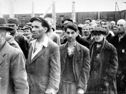 Men selected for labor at Auschwitz-Birkenau were not gassed