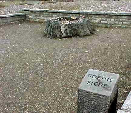 The stump of the oak tree, under which Goethe rested