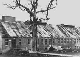 The Buchenwald camp was built in the spot where Goethe used to sit under this oak tree