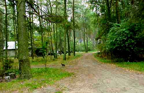 My 1998 photo of the entrance into the Treblinka camp