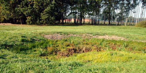 My photo of the ash pit near Krema III gas chamber