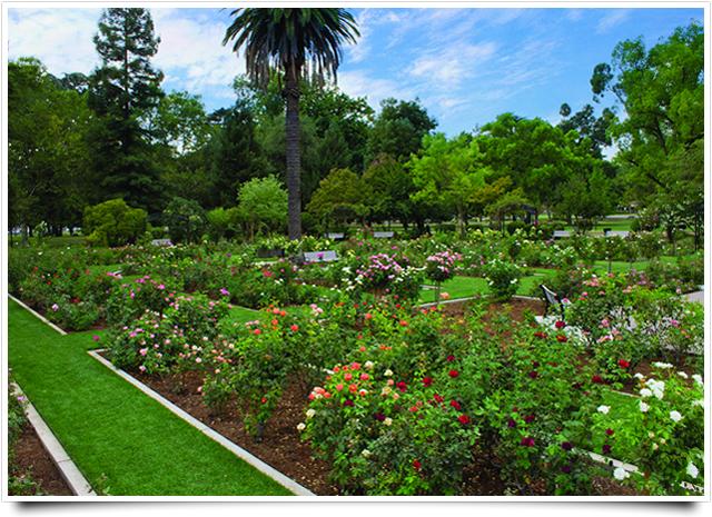 Sacramento park — I never promised you a rose garden ...